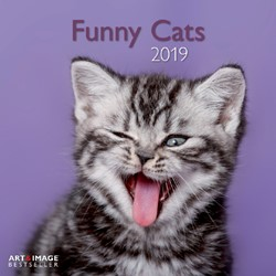 KALENDER 2019 TENEUES ART&IMAGE FUNNY CATS 30X30CM 1 STUK